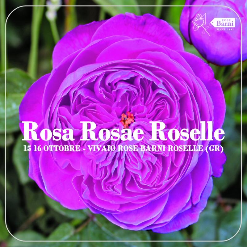 roselle-2016-autunno-ok