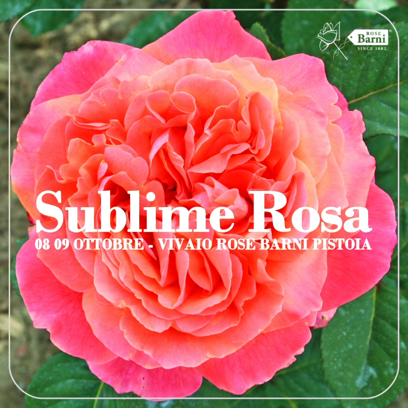 sublime-rosa-2016-autunno-ok