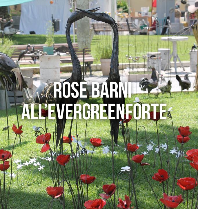 rose barni all'evergreenforte